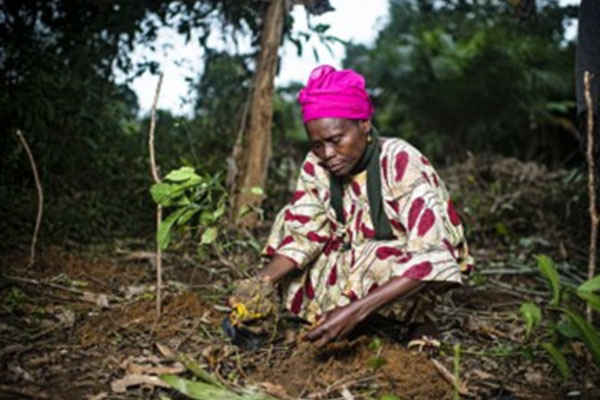 The-Impact-Of-REDD+-Implementation-On-Women-In-Cross-River-2