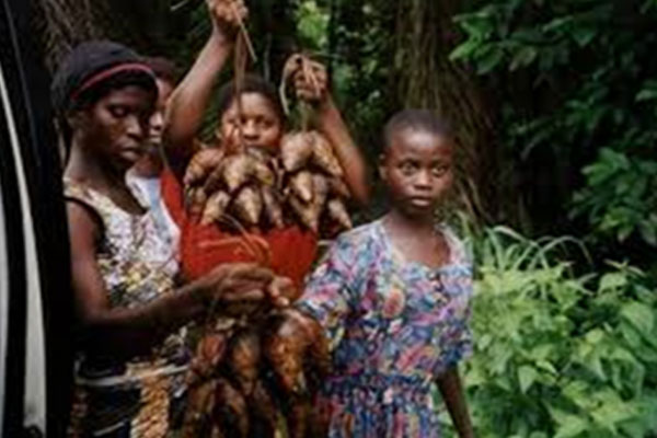 The-Impact-Of-REDD+-Implementation-On-Women-In-Cross-River